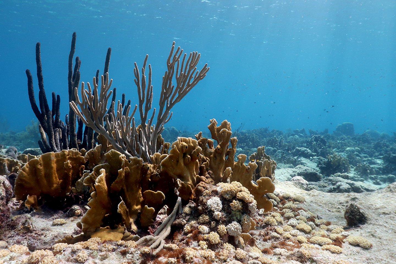 Coral reef Aruba