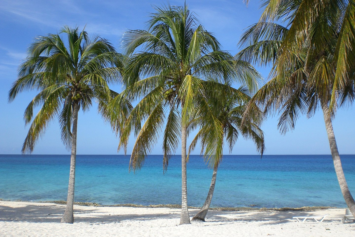 sandy beach with palm trees in Cuba