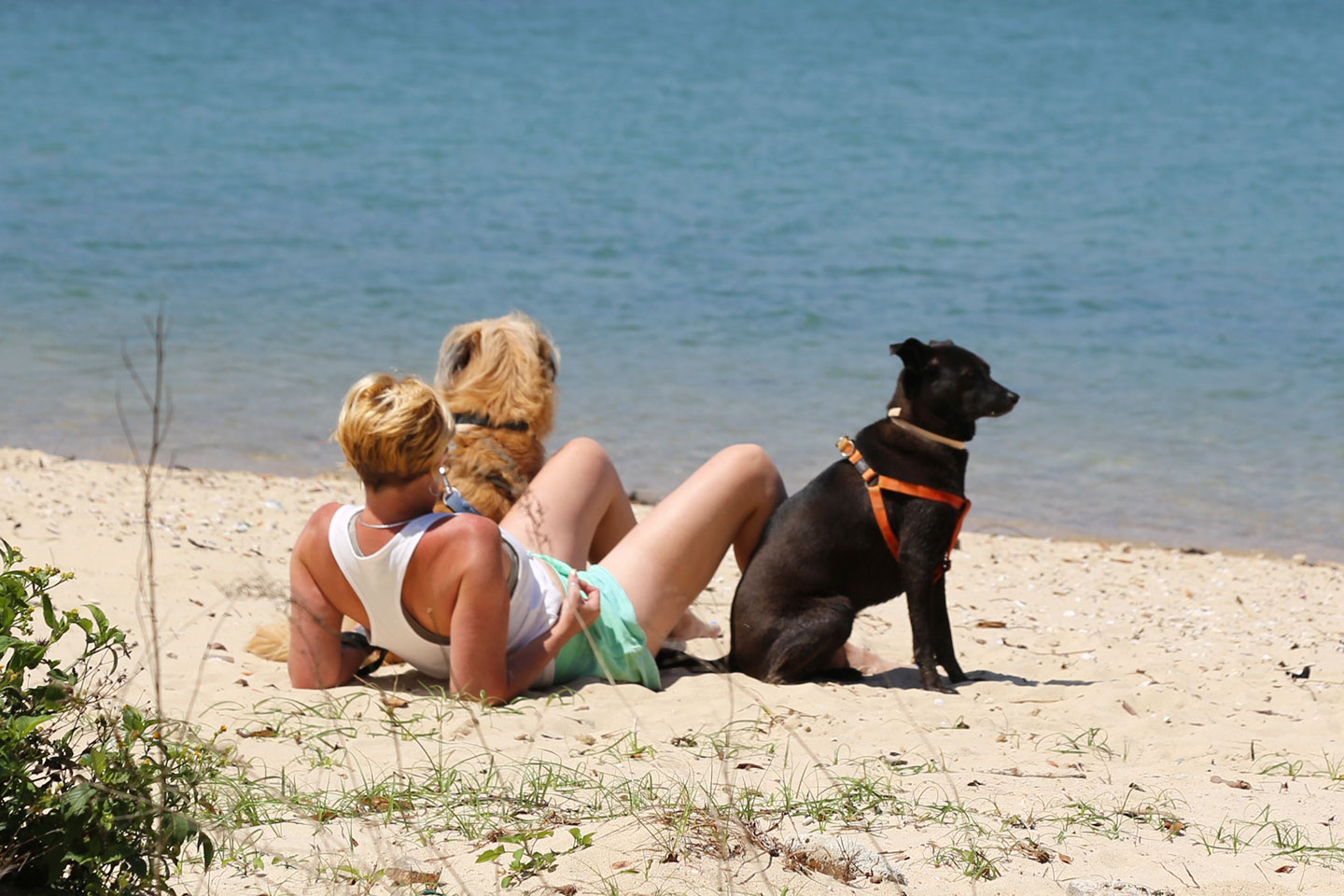 Man with two dogs at the beach